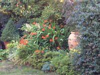 Gardening workshops @ Swann Nursery.
