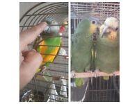 Tv bird parrot