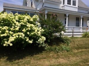 OCEANVIEW HOUSE RENTAL - LAHAVE