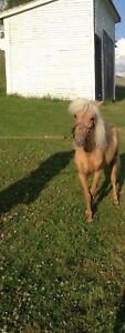 Cheval poney a vendre