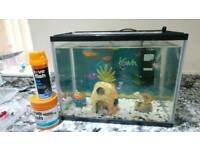 Fish and tank and filter