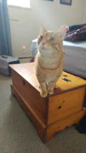 Female Ginger cat to a good home