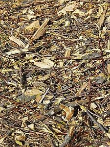Looking for woodchips, unused straw, or bags of leaves