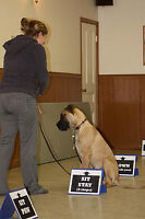 Rally Obedience class starting Thursday July 2 at 6:45pm!