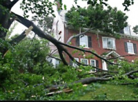SoS tree cleaning