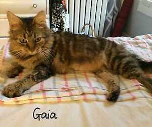 Gaia  - a petite, beautiful medium-long haired girl