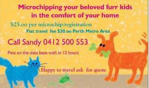 Microchipping your pets cats/dogs, kittens/puppies Perth Perth City Area Preview