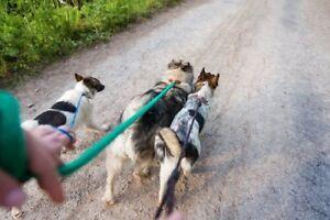 Marcheur/ promeneur de chien dans les Laurentides