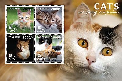TANZANIA - CATS,