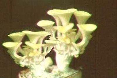 Limonenpilz Dekoidee Tischdeko kleines Geschenk für Valentinstag zum Geburtstag ()