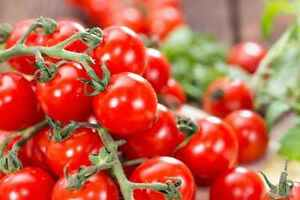 Semences de tomate Heirloom/Non-gmo -Rainbow Seeds Canada