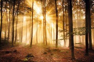 Poster Sonnenuntergang im Herbstwald - orange Sonnenstrahlen 91,5 x 61 cm