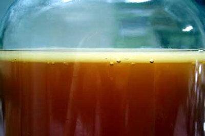 Kombucha Tea Culture Starter Kit , Raw & Organic, Start Brew