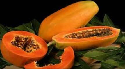 PAW PAW PLANTS FOR SALE PERTHS BIGGEST  PAPAYA FARM FRUIT TREES