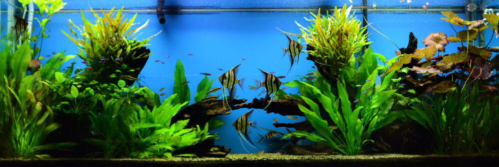 Wet Spot Tropical Fish