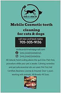 IN HOME Mobile cosmetic teeth cleaning for cats & dogs