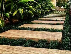 Dwarf  Mini Mondo Grass - 100 Plants for $55.00 Free Express Post