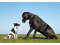Experienced dog walker, Heaton/Jesmond areas