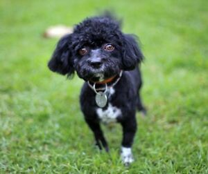 Dog sitter Knoxfield Knox Area Preview