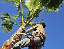 PALM TREE PRUNING AND REMOVALS! Parramatta Parramatta Area Preview