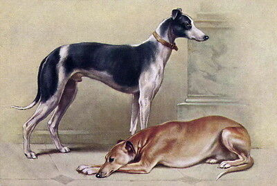 Vintage Art~A Black & White and a Brown Greyhound Dog Dogs~ NEW Lge Note Cards