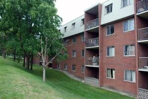 Spacious & Beautiful Suites Available Now! One Month Free Kitchener / Waterloo Kitchener Area image 5