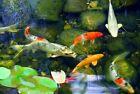 Clarifier Pond Water Treatments