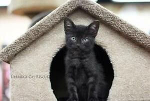 "Baby Male Cat - Tabby - black: ""Jet"""