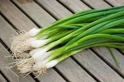 150 Evergreen White Bunching Onion 2018  All Non Gmo Heirloom Vegetable Seeds