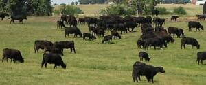89 ACRES ONLY 50 MINUTES FROM MELBOURNE..HORSE...CATTLE. Ballan Moorabool Area Preview