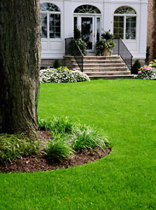 Lawn and Yard services