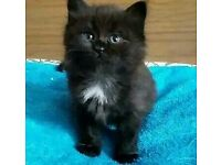Beautiful kittens looking for new homes