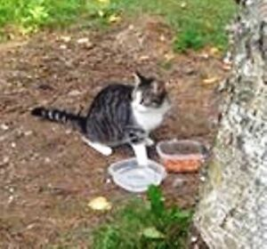 KLAWS: Found at  Morrison St by Hwy 35/Monck, Norland, friendly!