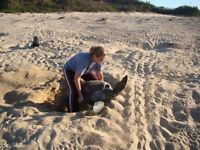 Join our sea turtle protection program in Mexico