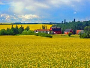 CANOLA SEED .. BULK .. $7.50 Lb .. 95% Sold Out .. !!!