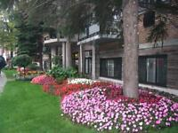 Mount Royal Apartment for rent