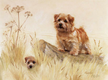 Norfolk Terrier Limited Edition Art Print by UK Artist Gail Tointon*