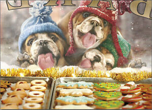 3 Christmas Dogs At Bakery Window 10 Funny Bulldog Boxed Christmas Cards