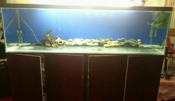 7 foot x 2 foot x 2 foot aquarium for sale 350 large for Big fish tanks for sale cheap