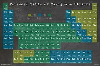 Periodic Table Of Marijuana Strains   Weed Poster   24X36 Pot Smoking 10885