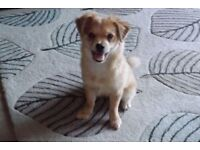 Very cute little dog forsale.