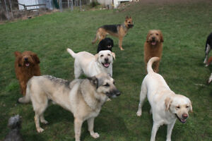 Dog Daycare and Boarding crate-free in Brooklin