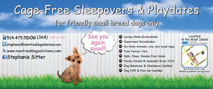 Cage-free playdates/sleepovers for small dogs even last minute!