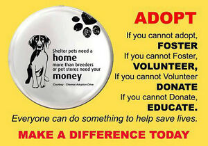 PARKLAND COUNTY ANIMAL SHELTER  LOST/FOUND & ADOPTABLE