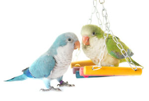 Wanna Purchase A Baby Parrot but You Work A lot ?