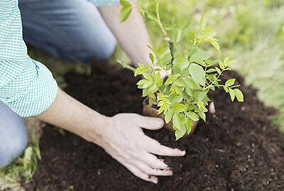 Empfindliche Bäumchen dürfen erst im März in den Garten. (© Thinkstock über The Digitale)