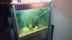 Fluval Profile 850 Aquarium 60 gallon