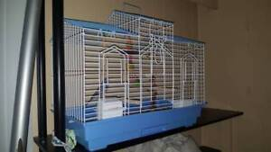 2 Budgies (Green and Blue), Cage, toys litter & Food are incl.
