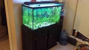 50 gallon fish tank + accessories
