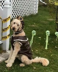 Aviator Dog Halloween Costume